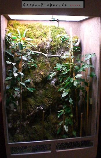 kronengecko haltung1 gecko. Black Bedroom Furniture Sets. Home Design Ideas